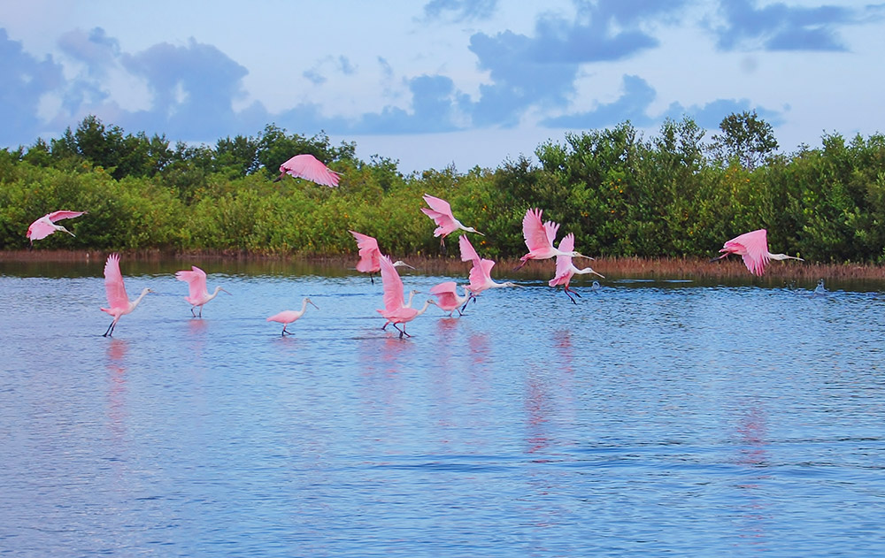 Birding at Tigertail Beach, Marco Island